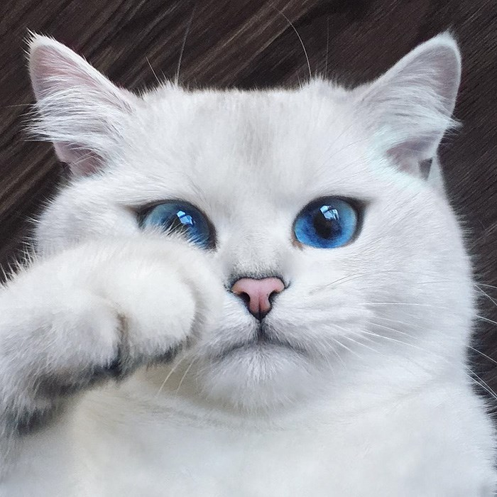 cats with the most beautiful eyes