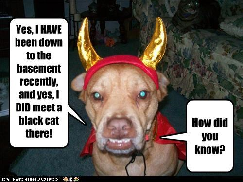 basement costume devil evil pit bull - 3559497728