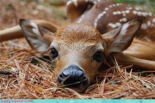 boopable deer nose - 3559698944