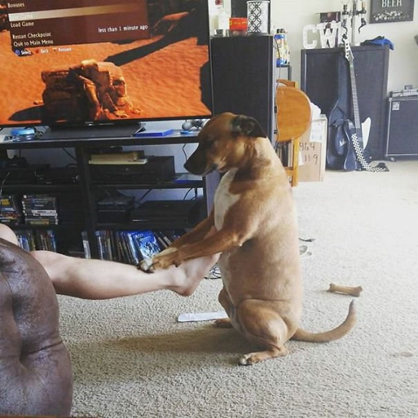 dogs doing bizarre things