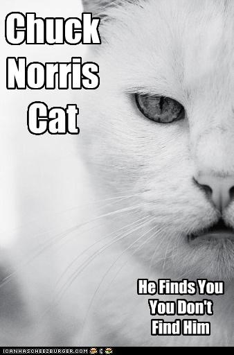 Chuck Norris Cat He Finds You You Don't Find Him