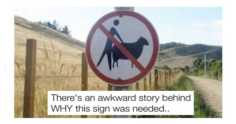 Funny sunday memes about animals, cats, dogs, sex, life, dating, relationships, online dating, guy fieri, food, oral sex, tinder, texting,signs, twitter, cover photo is a sign that looks like it is saying no having sex with cows.