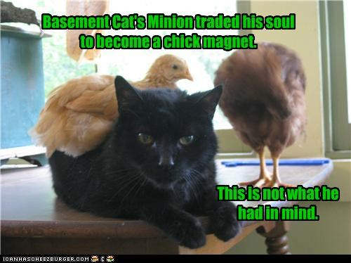 basement cat,lolbirds,lolchickens,oops,soul