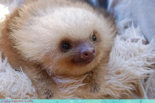 boopable,sloth,squee spree