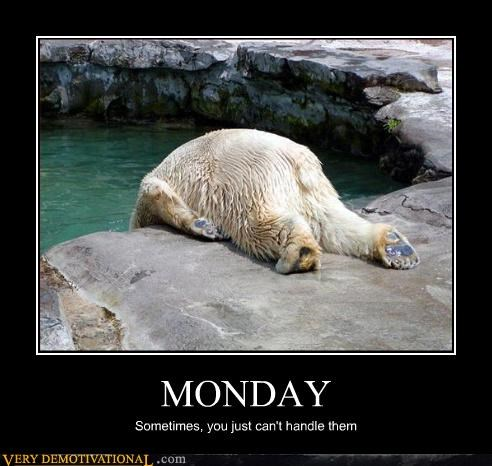animals,hilarious,i hate mondays,mondays,polar bear,zoo