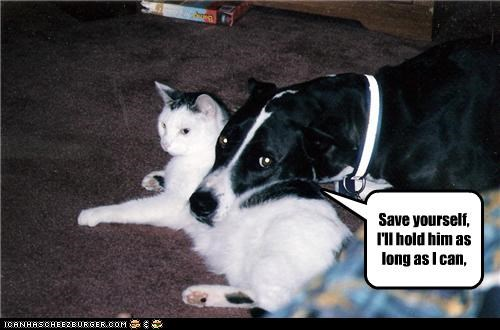 cat dogs save yourselves - 3562618112