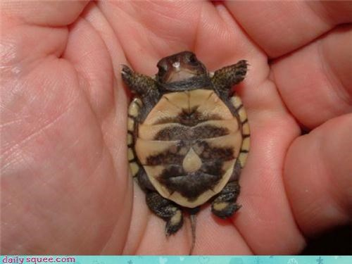 face so tiny turtle - 3562854656