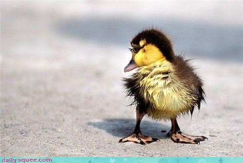 baby duck squee spree - 3562859776