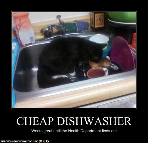 dishwasher,helping,nom nom nom
