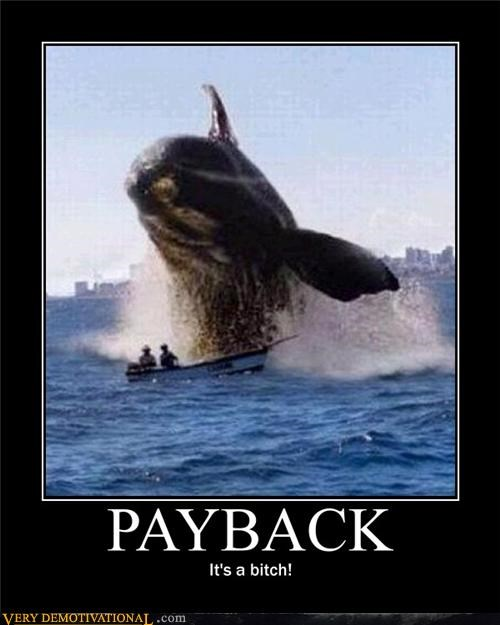 animals boating free willy nature Terrifying whales - 3563205632