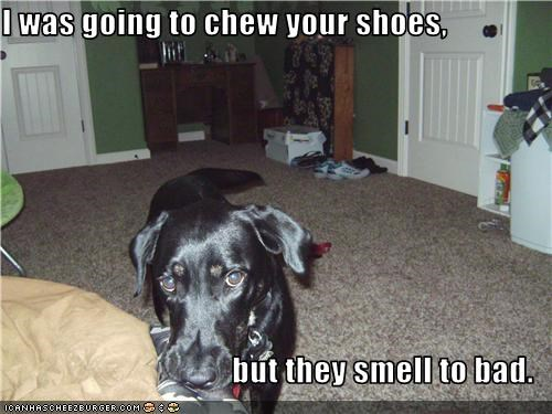 chew,shoes,stink