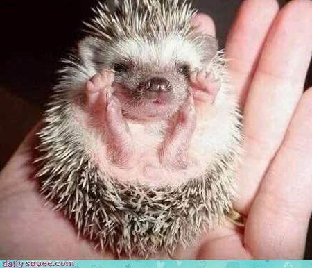 face hedgehog jazzhands - 3564457216