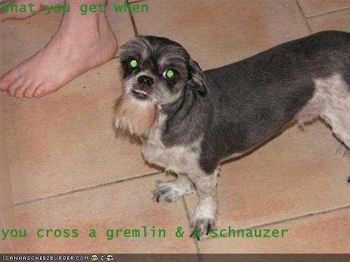 Cheezburger Image 3564647168