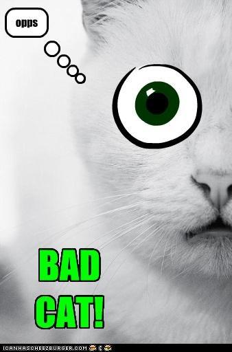 opps BAD CAT!
