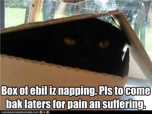 basement cat box evil nap - 3564864256