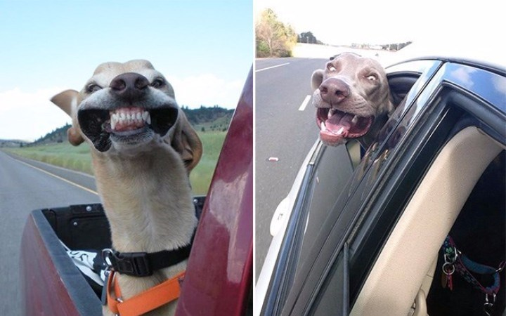 dogs rides funny - 3565061