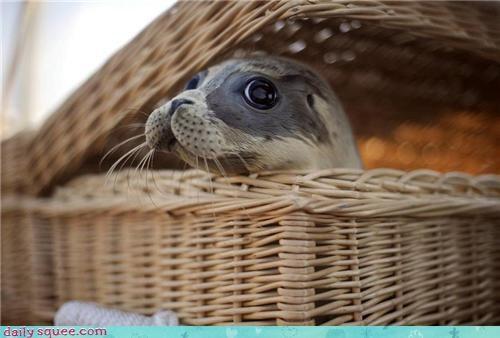 face seal Voltron Squee - 3565296640
