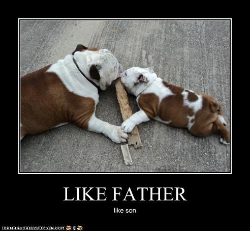 bulldog,chew,Father,fathers day,puppy,son,stick