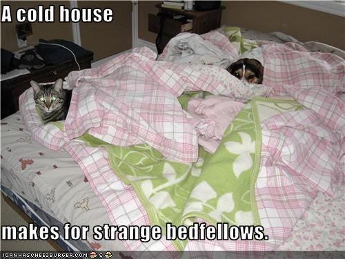 bed,blanket,cold,comforter,lolcat,whatbreed