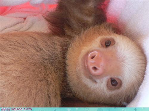 eyes face sloth - 3565862656