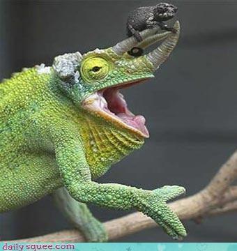 face funny reptile - 3566164224