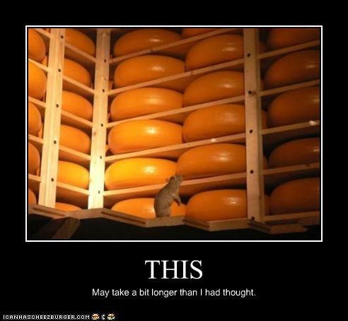 Cheezburger Image 3567036416