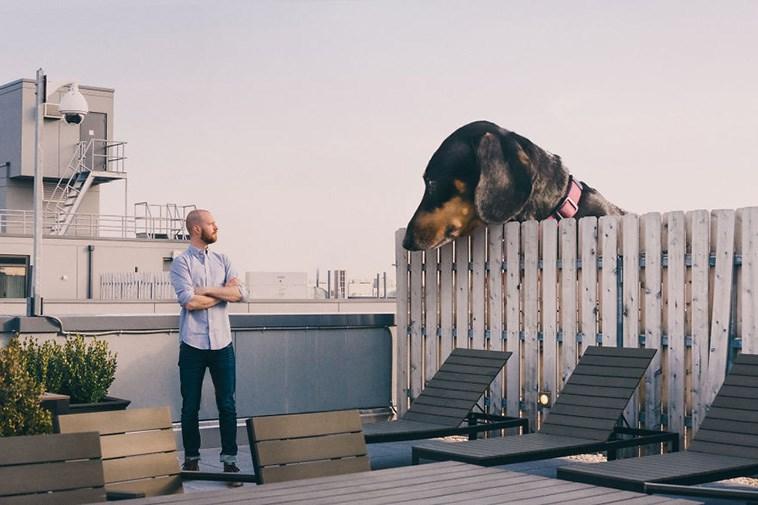 tiny dog turns to giant dog by photoshop