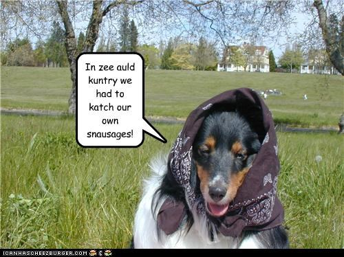 collie,old country,outside,scarf,snausages