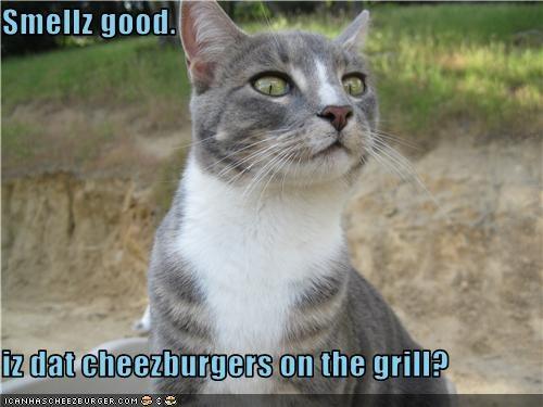 Cheezburger Image 3568468992