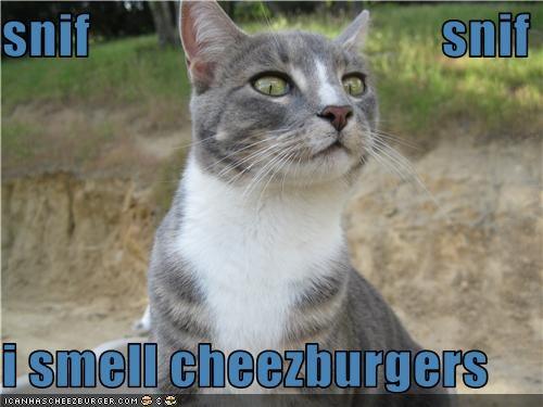 Cheezburger Image 3568738304