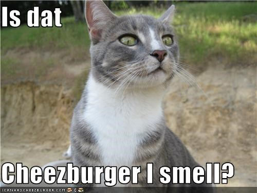 Cheezburger Image 3568748032