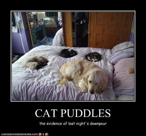 bed golden retriever lolcats puddle rain sleep - 3568936960