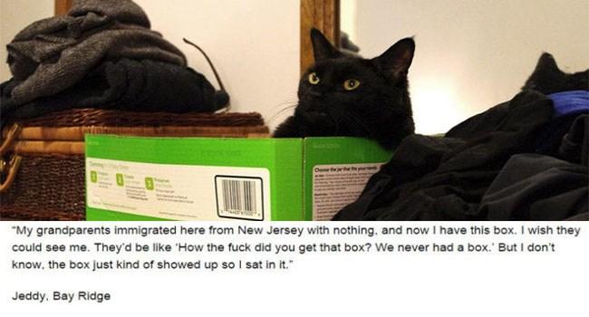 cats reveal dark secrets