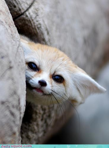 face fennec fox nerd jokes - 3569601024