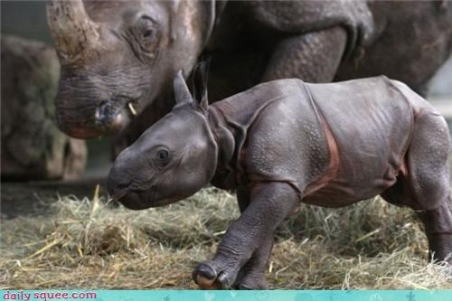 baby nerd jokes rhino - 3569731840