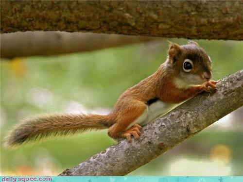 acorn head squirrel - 3569736960