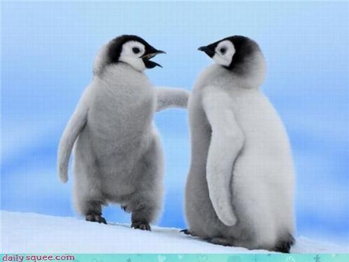 baby new jokes penguins - 3570310912