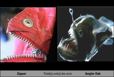 angler animals clothing fish zipper