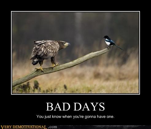 bad days birds circle of life Death demotivational nature Terrifying - 3573626368
