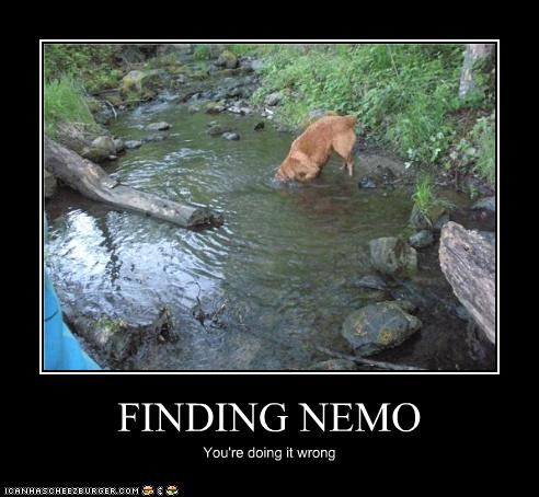 FINDING NEMO You're doing it wrong