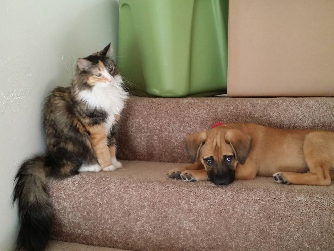 a funny list of dogs and cats getting along or the opposite depending on who you ask