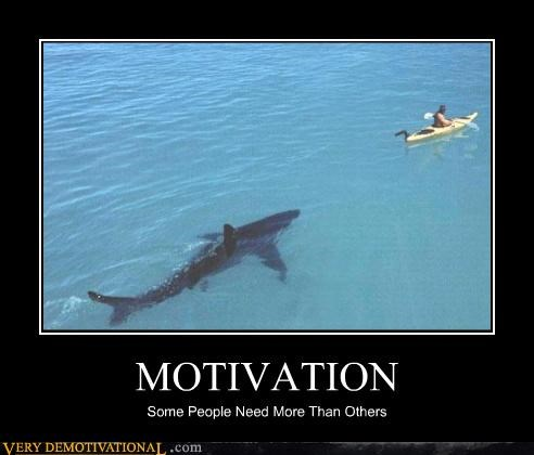 exercise motivation shark swimming Terrifying water - 3575325184