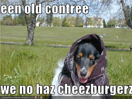 Cheezburger Image 3575398144