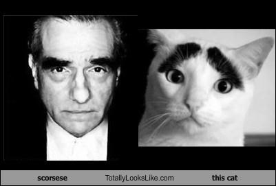 animals,Cats,director,eyebrows,martin scorsese