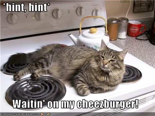Cheezburger Image 3576259840