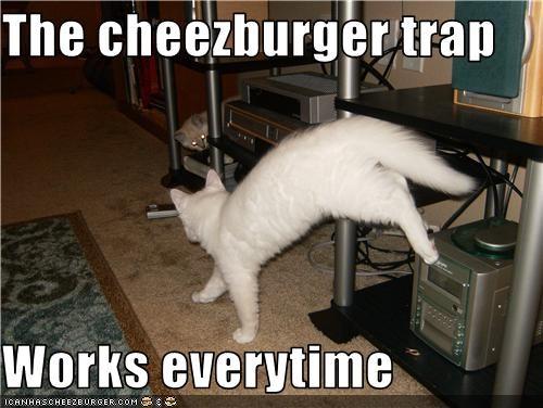 Cheezburger Image 3576674560