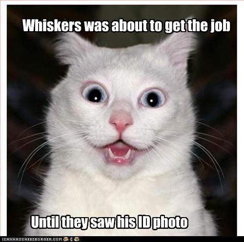job Photo work - 3577235200