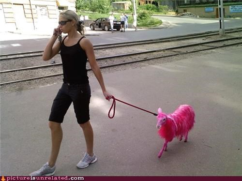 animals dogs pink thing walking wtf - 3578312704