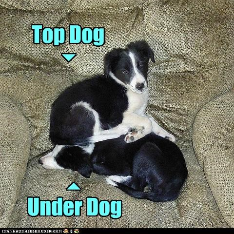 border collie,chair,puppy,sit,top dog,underdog