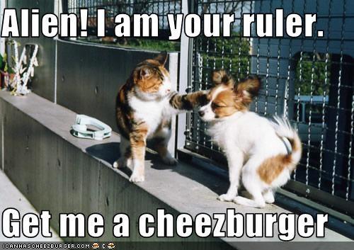 Cheezburger Image 3580679680
